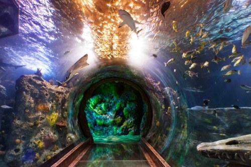 Aquarium in Dallas, Texas